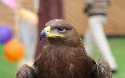 Birds Photo Gallery